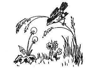 Воробей и былинка. Украинские народные сказки. Сказки Онлайн